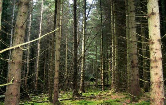 A Safe Investment in Forestry